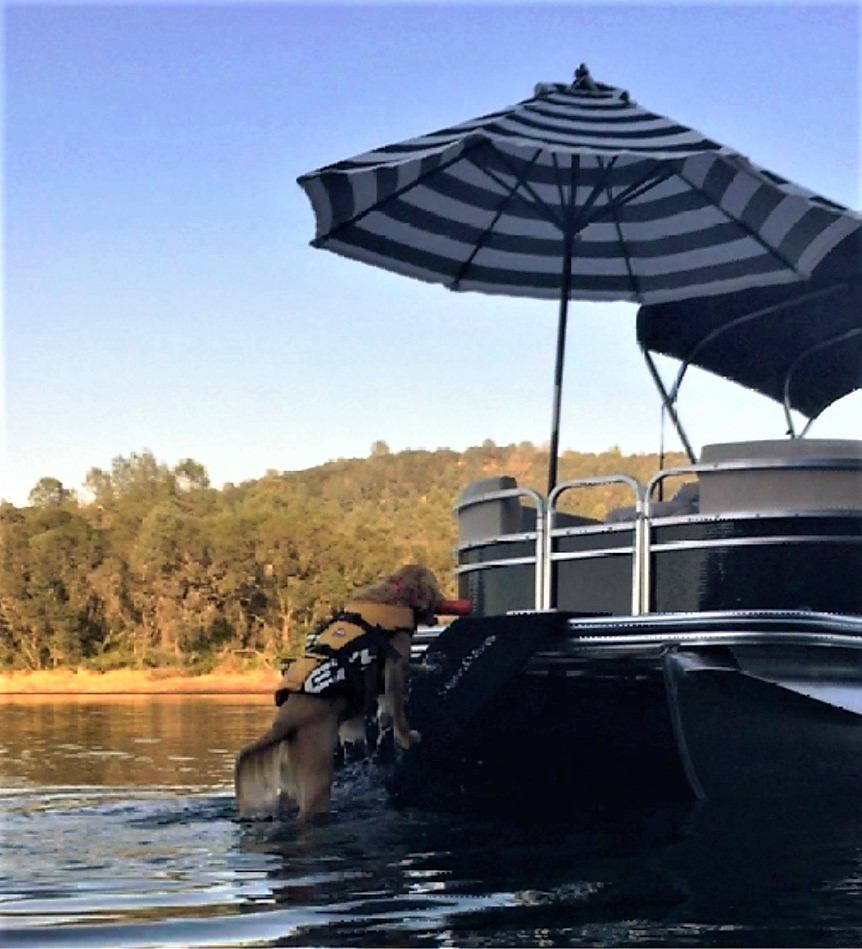 Doggydocks Ramps For Dogs Perfect For Any Boats Docks And Pools